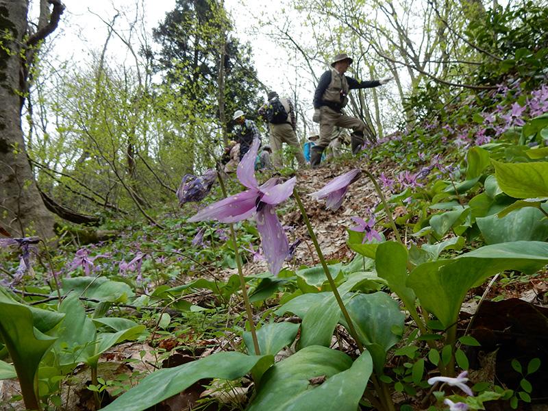 神道山で春の植物観察(きらら自然の会)