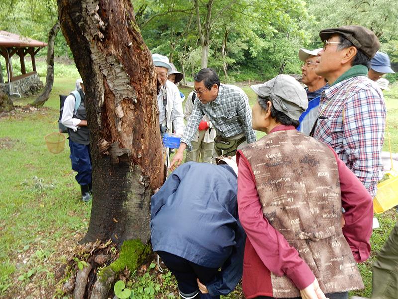 今井・不動滝周辺で動植物観察(きらら自然の会)
