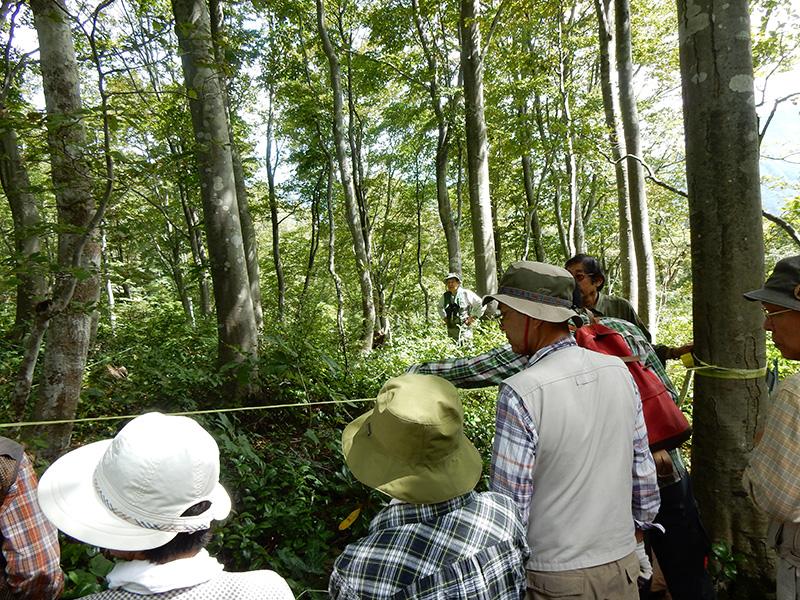 根知しろ池の森でブナ林調査(きらら自然の会)