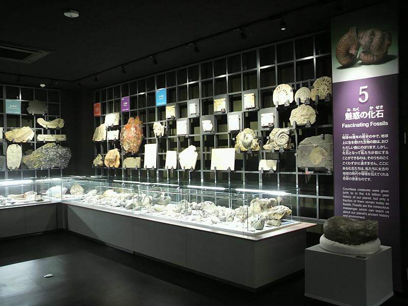 第5展示室 魅惑の化石